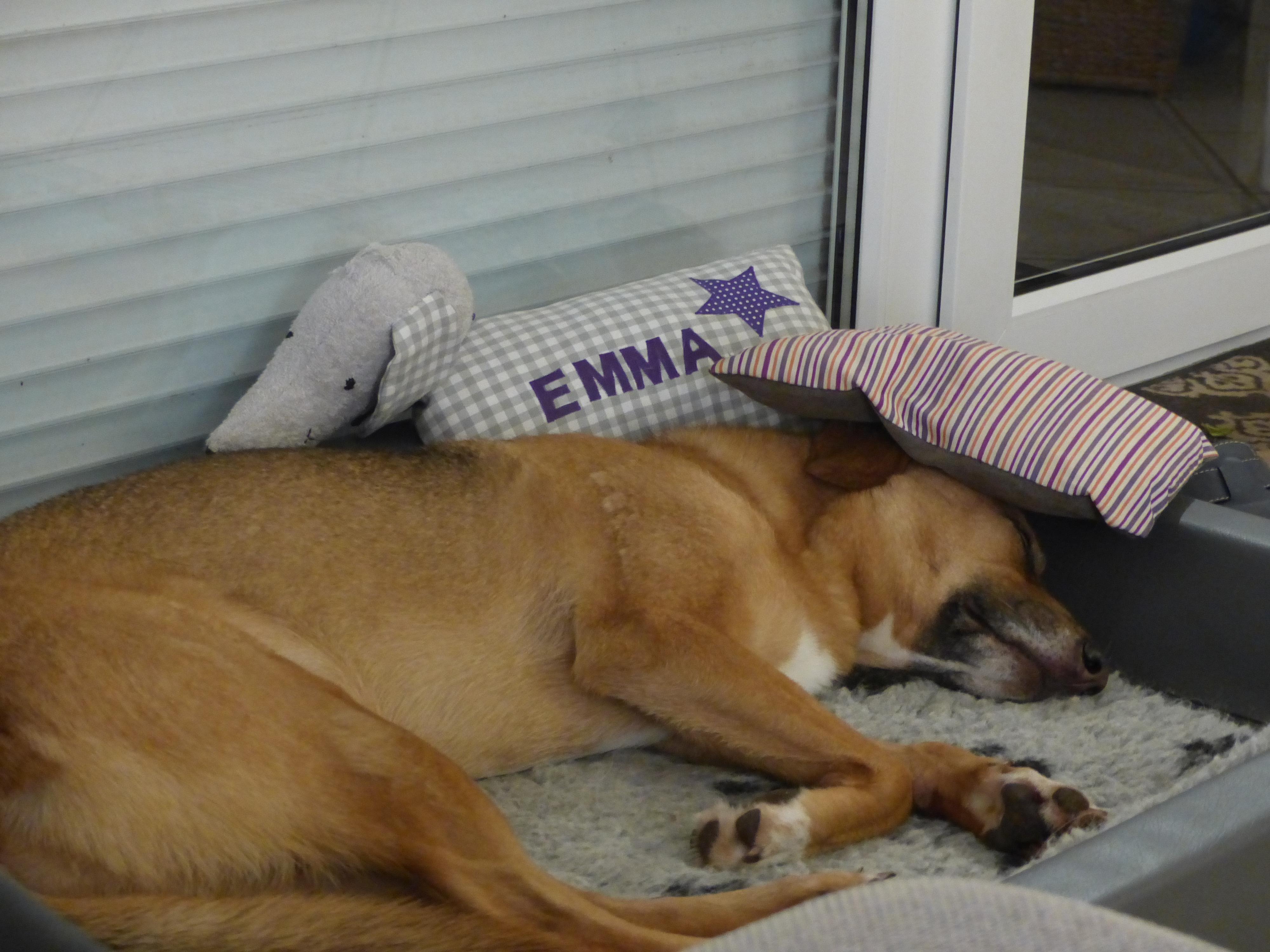 Schlafende Hunde soll man nicht wecken!