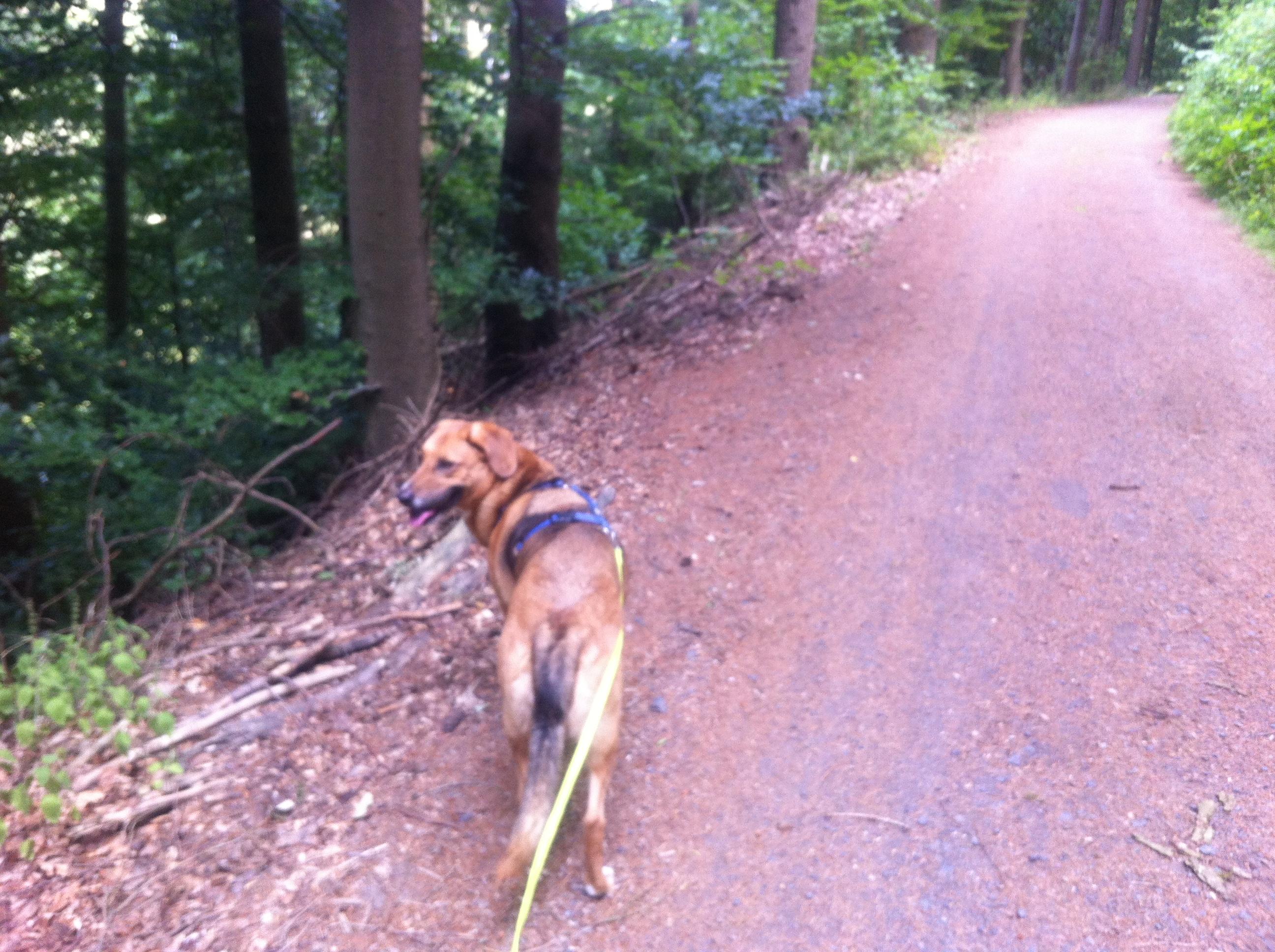 Hundewanderung in der Eifel