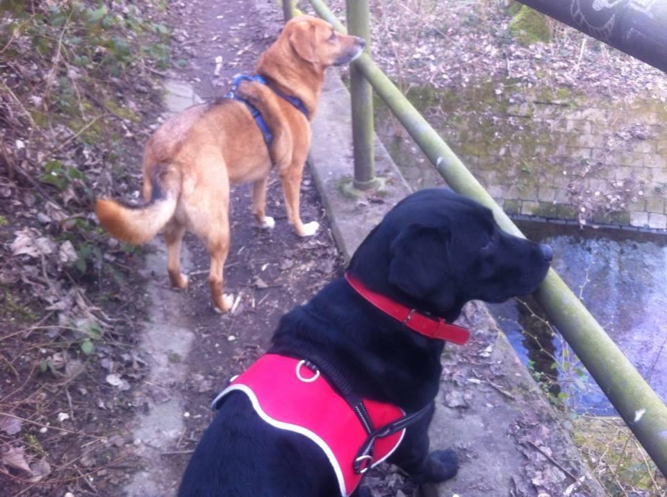 Ziemlich beste Freunde! Warum andere Hunde so wichtig für unsere Hunde sind?