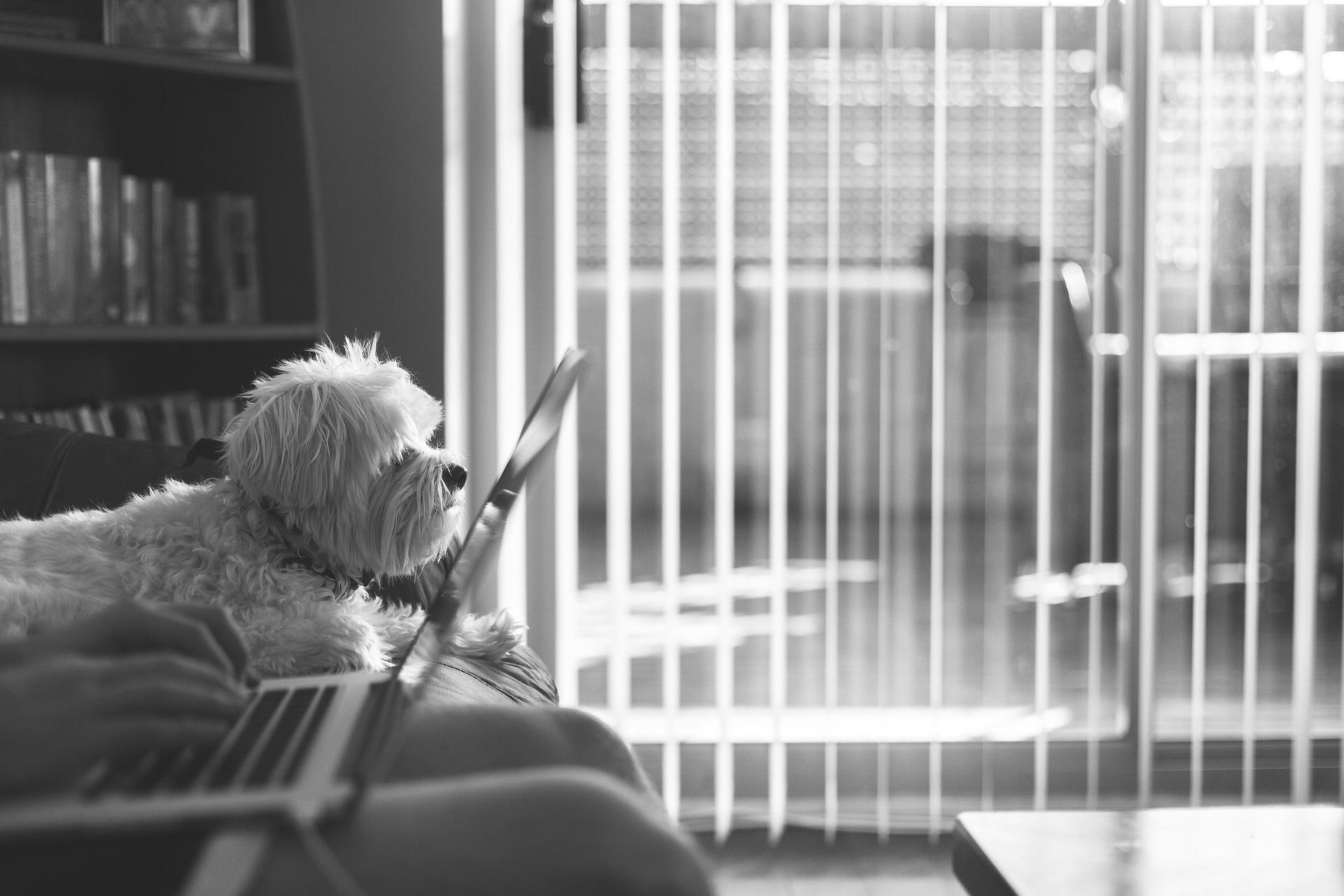 Job und Hund – alles unter einem Hut