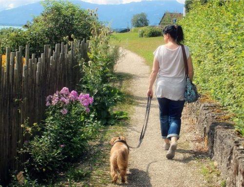 In diesen Reha-Kliniken ist die Mitnahme von Hunden erlaubt.