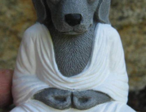 Achtsamkeit mit Hund als Idee für ein neues Produkt